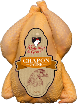 Chapon Jaune